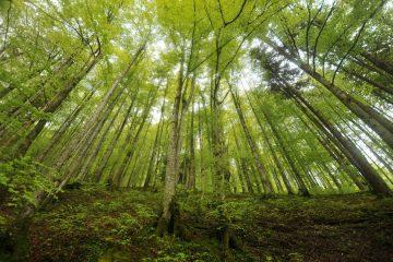 Environment & Values